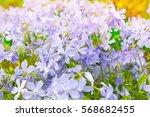 Summer Flowers Background....