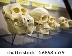 skulls in a raw showing humans...   Shutterstock . vector #568685599