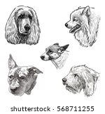 sketches of the dogs heads | Shutterstock . vector #568711255