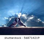 lovebird silhouette or...   Shutterstock . vector #568714219