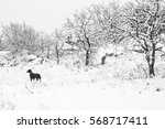 snow landscape with a dog | Shutterstock . vector #568717411