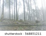 surreal faded forest scene with ... | Shutterstock . vector #568851211