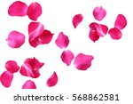 Stock photo abstract of rose petals on white background 568862581