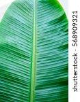 banana leaf  | Shutterstock . vector #568909321