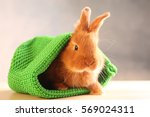 Stock photo cute funny rabbit in green hat on wooden table 569024311