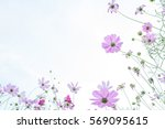 Cosmos Flower Field With Natur...