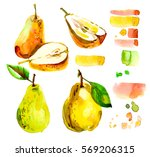 set with a pear in a cut ... | Shutterstock . vector #569206315