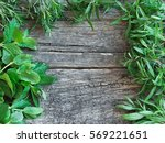 frame of fresh herbs   rosemary ... | Shutterstock . vector #569221651