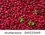 Cranberry. Fresh Ripe Red Berr...