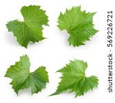 Grape Leaves Isolated White Collection - Fine Art prints