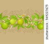 bergamot vector horizontal... | Shutterstock .eps vector #569227675