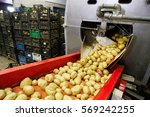 Small photo of Cleaned potatoes on a conveyor belt, prepared for packing. Agribusiness, food industry technology and trade concept.