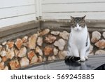 Small photo of Cute cat, cat lying on the wooden floor in the background blurred close up playful cats, cats, cats, cats relaxing vacation.