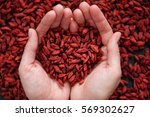 red dried goji berry superfood... | Shutterstock . vector #569302627