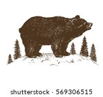 bear grizzly in the forest.hand ... | Shutterstock .eps vector #569306515