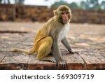monkey  | Shutterstock . vector #569309719