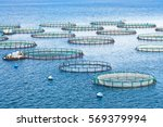 sea fish farm. cages for fish... | Shutterstock . vector #569379994