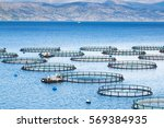 sea fish farm. cages for fish... | Shutterstock . vector #569384935