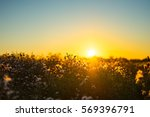 Sunset Nature view of summer field. Beautiful calm Sunset background. Nature and ecology concept. Golden evening sunset on the meadow, rural summer backgrounds. Nature rural floral field on sunset.