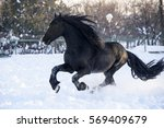 Stock photo horse galloping on snow 569409679