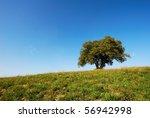 large oak tree in green field... | Shutterstock . vector #56942998
