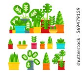 set of house plants. colourful... | Shutterstock .eps vector #569479129