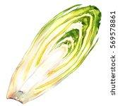 half of head belgian endive... | Shutterstock . vector #569578861