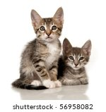 Stock photo kittens on a white background 56958082