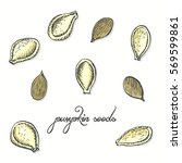 isolated pumpkin seeds on a... | Shutterstock .eps vector #569599861