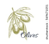 olives sketch. vector green... | Shutterstock .eps vector #569671051