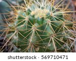 cactus close up | Shutterstock . vector #569710471