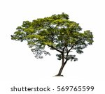 tree isolated on a white