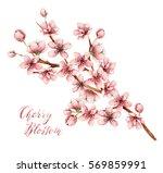Cherry Blossom  Watercolor...