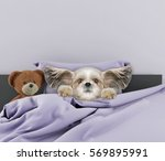 little cute dog sleeping and... | Shutterstock . vector #569895991