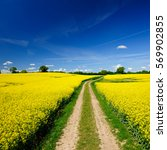 small dirt road through fields... | Shutterstock . vector #569902855