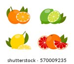 icons vector citrus fruits ... | Shutterstock .eps vector #570009235