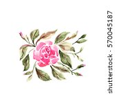 watercolor illustration of a... | Shutterstock . vector #570045187