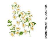 realistic jasmine flower.... | Shutterstock .eps vector #570050785