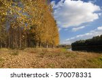 Row Trees Along A River In The...