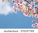 beautiful flower for background ... | Shutterstock . vector #570197785