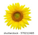Isolate Sunflower