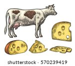pieces of cheese and cow. color ... | Shutterstock .eps vector #570239419
