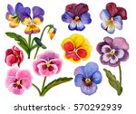 Watercolor Flower Set  Hand...