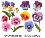 Watercolor Flower Set  Hand...