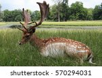 a deer with a big antler in the ... | Shutterstock . vector #570294031