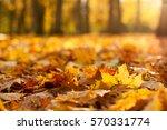 golden autumn | Shutterstock . vector #570331774