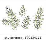 set of hand drawn illustration... | Shutterstock .eps vector #570334111