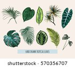 beautiful hand drawn  botanical ... | Shutterstock .eps vector #570356707