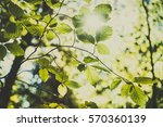 beautiful summer in the forest. ... | Shutterstock . vector #570360139