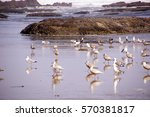 Seagulls  On The Coastal Sand...